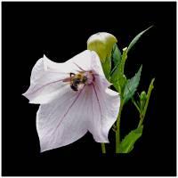 WIP-bee copy